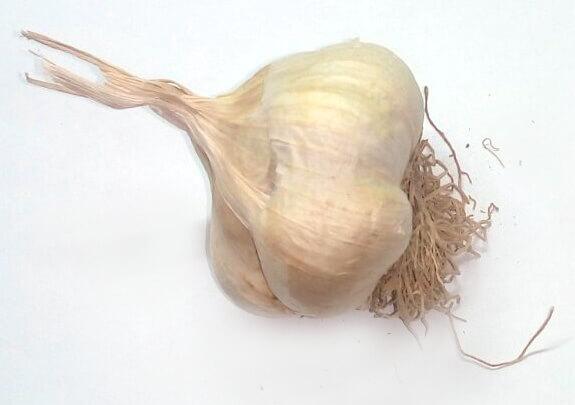 Σκόρδο Μια υπερτροφή