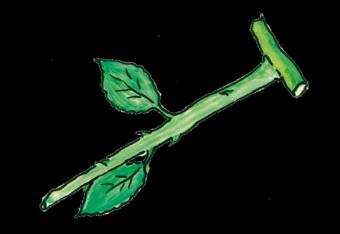 Πολλαπλασιασμός φυτών